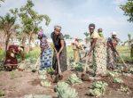 Las mujeres y la conservación de los suelos